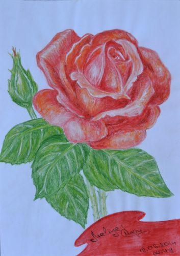 <p>Роза- рисунок цветными карандашами</p>